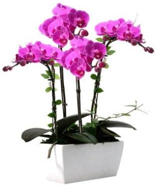 Seramik vazo içerisinde 4 dallı mor orkide  Çorum ucuz çiçek gönder