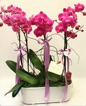 Beyaz seramik içerisinde 4 dallı orkide  Çorum çiçekçi mağazası
