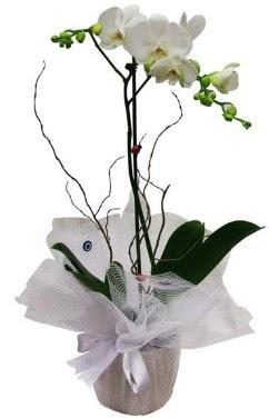 Tek dallı beyaz orkide  Çorum uluslararası çiçek gönderme