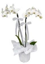 2 dallı beyaz orkide  Çorum online çiçekçi , çiçek siparişi