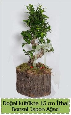 Doğal kütükte İthal bonsai japon ağacı  Çorum çiçek satışı