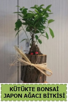 Kütük içerisinde doğal bonsai ağacı  Çorum çiçek , çiçekçi , çiçekçilik