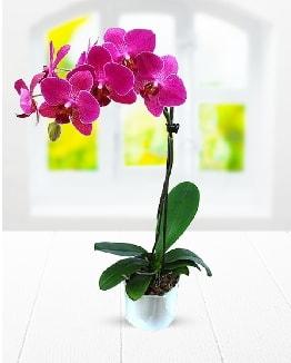 Tek dallı mor orkide  Çorum ucuz çiçek gönder