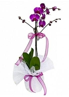 Tekli Mor Orkide  Çorum çiçekçi telefonları
