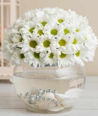 Fanusta beyaz Papatya  Çorum ucuz çiçek gönder