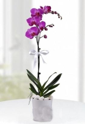 Tek dallı saksıda mor orkide çiçeği  Çorum çiçek siparişi vermek