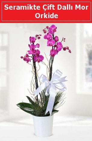 Seramikte Çift Dallı Mor Orkide  Çorum çiçek online çiçek siparişi