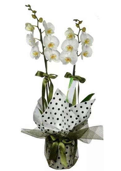 Çift Dallı Beyaz Orkide  Çorum hediye sevgilime hediye çiçek